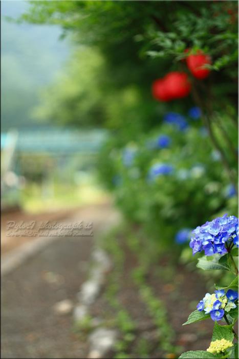2011-07-03_0149.jpg